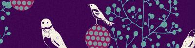 Echinobirds